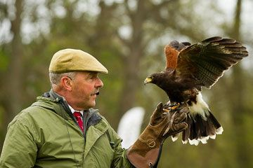 James McKay with a Harris Hawk